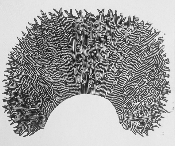 Kujaku (paon) - 2016 - 30x40cm
