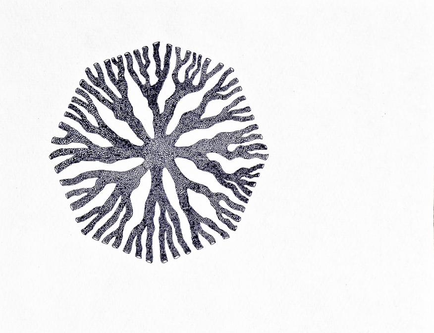 Disconalia - 2017 - 30x40cm